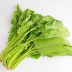 ほうれん草ダイエットの効果と方法!チラコイド摂取にはサプリメント